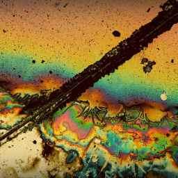 Unter dem Mikroskop.