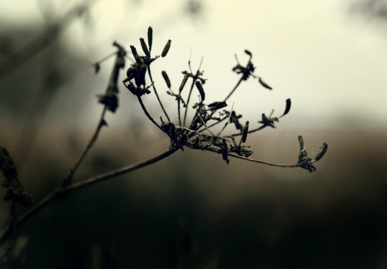 Original Photo by Joanna Kwon
