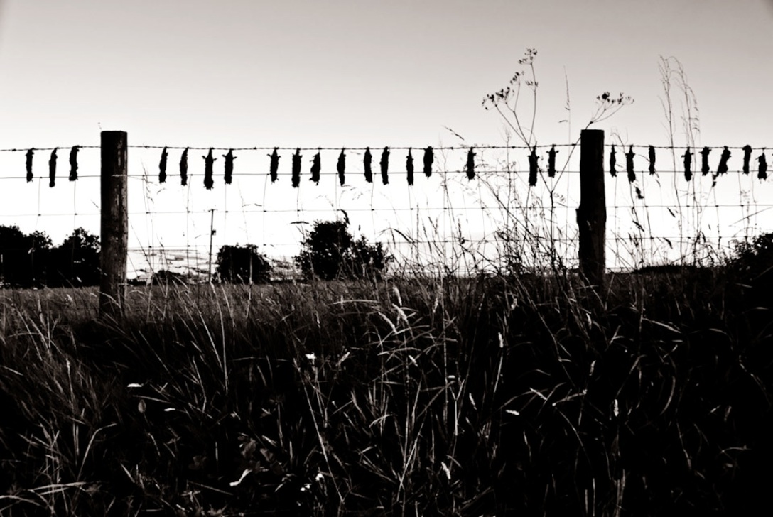 Im viktorianischen England pflegten Wildhüter gefangene Maulwürfe (Talpa europaea) aufzuhängen, um den Landbesitzern ihre Arbeit zu präsentieren und zu beweisen, dass sie ihr Geld wert waren. Heute wäre die Prozedur eigentlich nicht mehr nötig, wird aber unter der Bezeichnung Tradition fortgesetzt. // Original Photo by Allan Wellings (CC BY-NC 2.0)