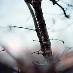 Unpassende Bäume.