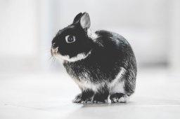 Ein pelziges Kaninchen.