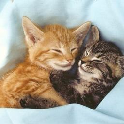 Katzenbabys.