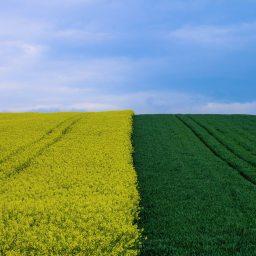 Landwirtschaft und Liebe.